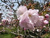 2010阿里山.櫻花.春浪漫:20100318阿里山0053.JPG
