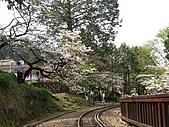 2010阿里山.櫻花.春浪漫:20100318阿里山0057.JPG