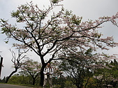 2010阿里山.櫻花.春浪漫:20100318阿里山0061.JPG