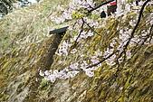 2010阿里山.櫻花.春浪漫:20100318阿里山0304.JPG