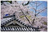 2016 九州熊本城:2016日本九州_0907.JPG