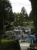 2010阿里山.櫻花.春浪漫:20100318阿里山0081.JPG