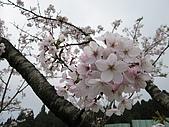 2010阿里山.櫻花.春浪漫:20100318阿里山0091.JPG