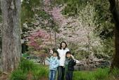2010 阿里山櫻花:DSC01810.JPG