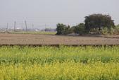 2015 台一農場:DSC01501.JPG