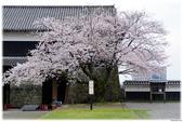 2016 九州熊本城:2016日本九州_0896.JPG