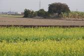 2015 台一農場:DSC01499.JPG