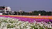 2010橋頭花海:DSC00742.JPG