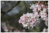 2016 九州阿蘇溫泉:2016日本九州_1041.JPG