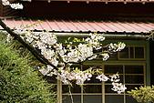 2010阿里山.櫻花.春浪漫:20100318阿里山0328.JPG