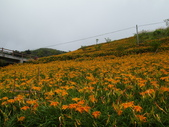 2011花東行-太麻里-六十石山:2011花東067.JPG