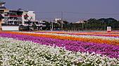 2010橋頭花海:DSC00748.JPG