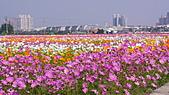2010橋頭花海:DSC00750.JPG