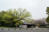 2010 京阪神賞櫻行~名古屋:DSC03832.jpg