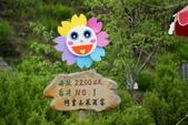 2010 阿里山櫻花:DSC01593.JPG