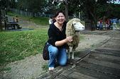 綠草如茵、綿羊成群的清境農場:DSC_0275.jpg