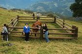 綠草如茵、綿羊成群的清境農場:DSC_0229.jpg