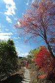 有如世外桃源一般的福壽山農場:DSC_0033.JPG