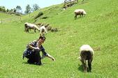 綠草如茵、綿羊成群的清境農場:DSC_0294.jpg