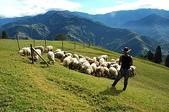 綠草如茵、綿羊成群的清境農場:DSC_0189.jpg