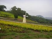 20070826~大溪花海:1464862150.jpg