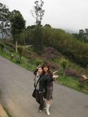 新竹薰衣草森林:045
