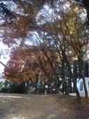 20071208_09~武陵賞楓:1363378041.jpg