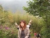 新竹薰衣草森林:038