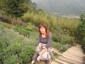 新竹薰衣草森林:044