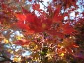 20071208_09~武陵賞楓:1363378055.jpg