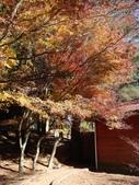 20071208_09~武陵賞楓:1363378057.jpg