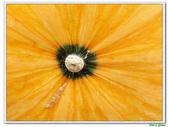 南瓜-葫蘆科-民生植物-藤蔓植物:南瓜16.jpg