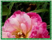 玫瑰10:玫瑰05.jpg