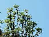 鐘萼木♥♥:鐘萼木4