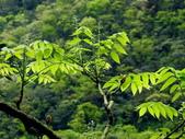鐘萼木♥♥:鐘萼木6