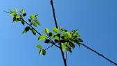 小構樹:小構樹02.JPG