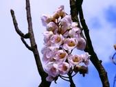 鐘萼木♥♥:鐘萼木13