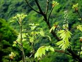 鐘萼木♥♥:鐘萼木5