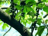 水同木:水同木6