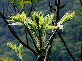 鐘萼木♥♥:鐘萼木3