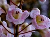 鐘萼木♥♥:鐘萼木16
