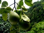 柚子:柚子13