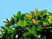 水同木:水同木1