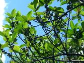 水同木:水同木4