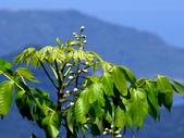 鐘萼木♥♥:鐘萼木7