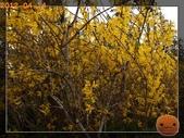 20120413_加拿大10日遊:R0186873.jpg