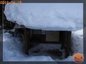 20120413_加拿大10日遊:R0187355.jpg