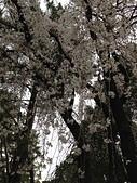 行動相簿:2014-03-25 190211.JPG