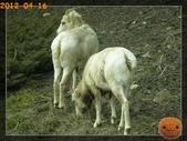 20120413_加拿大10日遊:P4166895.jpg