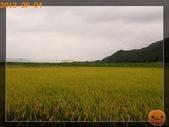 201209京阪夏疏水_2:R0191327.jpg